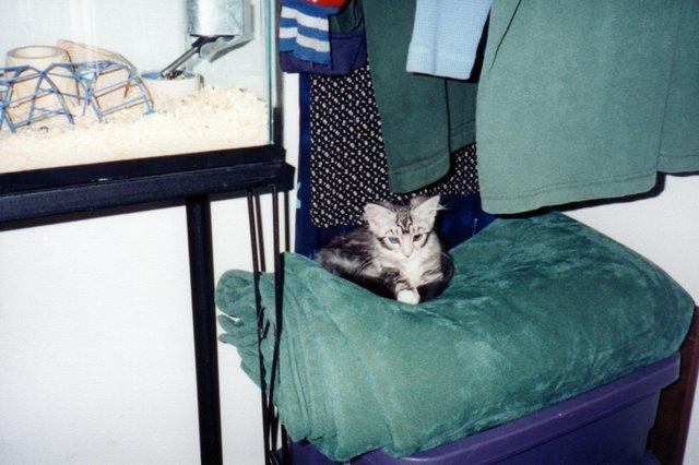 Maggie Kitten, Dec 1999