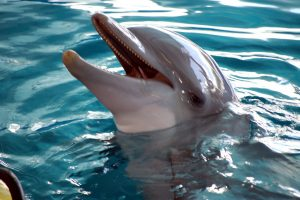 Winter from a Dolphin Tale